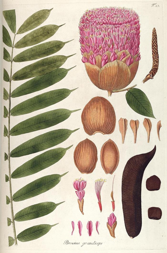 free botanical print poppytalk